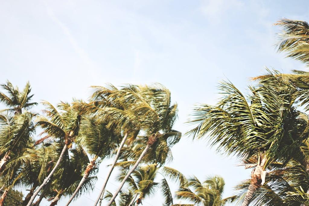 PalmTrees.jpeg