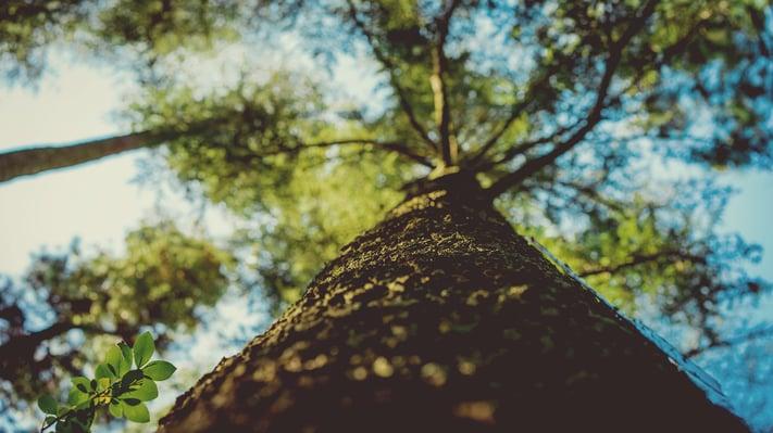 Tree-Summer-Growth.jpeg